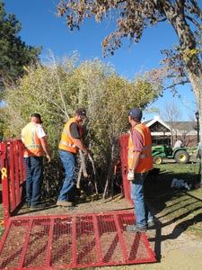 Unloading willow and saplings at sculpture site--day 1