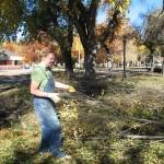 De-leafing saplings--day 2