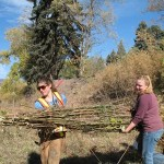 Loading bundles of willow--day 1