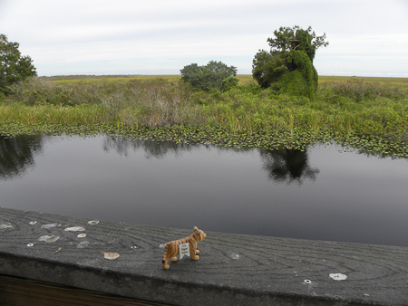 Baby T surveys the vast Florida Everglades, as Joe and I make our way from the Atlantic coast to the Gulf coast.