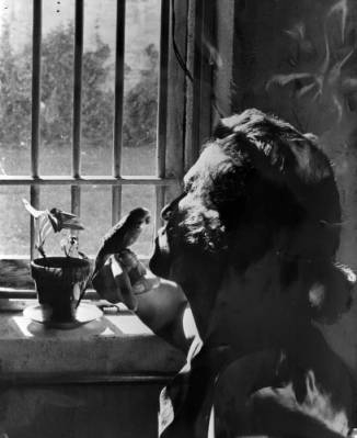 Courtesy of Denver Public Library - Western History Museum; Female inmate in 1959 kisses a bird
